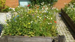 Raploch Schools Wildflower Beds - IMG_1845