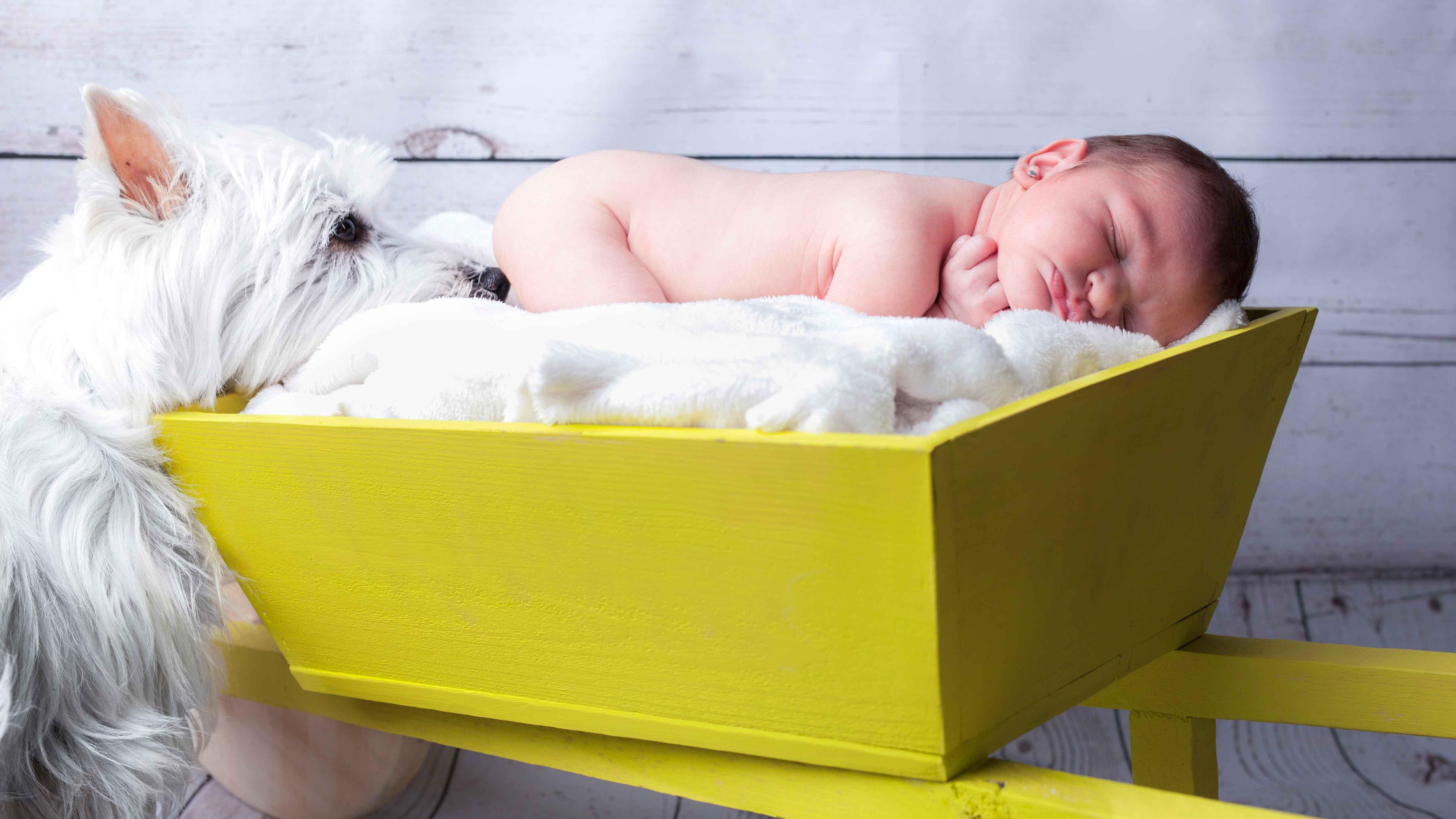 newborn-reportatge-estudi-gos