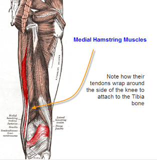 Adductor Hamstring Muscle Pain and I Have Knee Pain and Feel Like it Might Give Way
