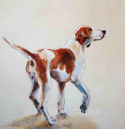 haydon hound reduced