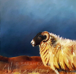 sheep 2
