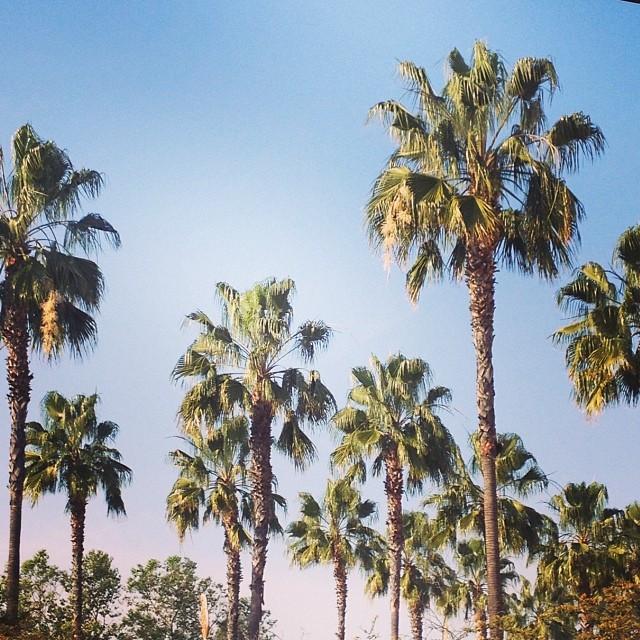 Sunny California in March