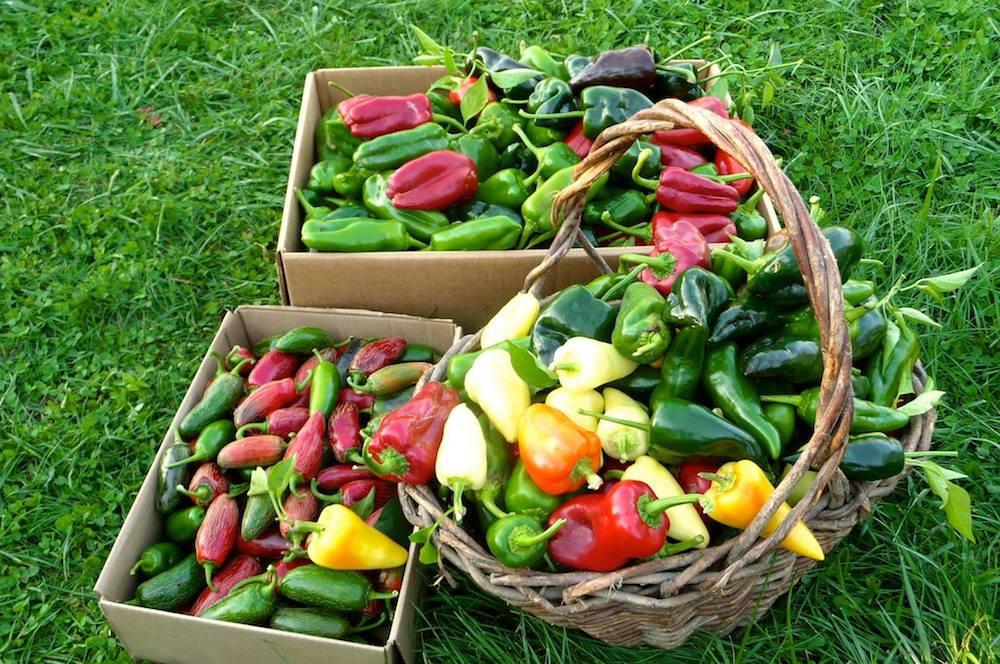 Preserving the Harvest
