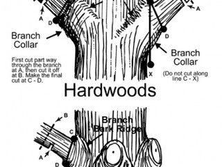 (How To) Prune Away A Troublesome Tree Limb