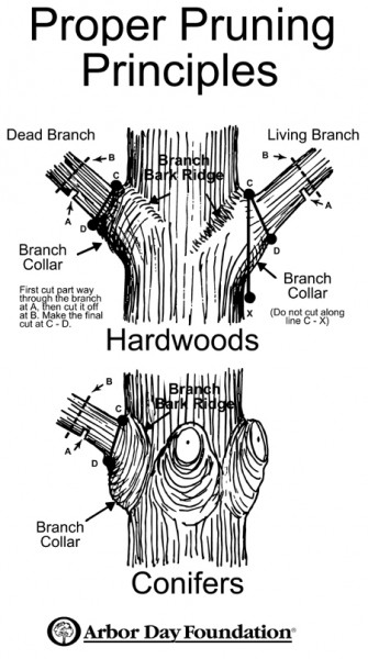 Figure 1. A confusing guide to basic pruning