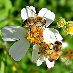 256px-Here_Be_Bees_(8005653317).jpg