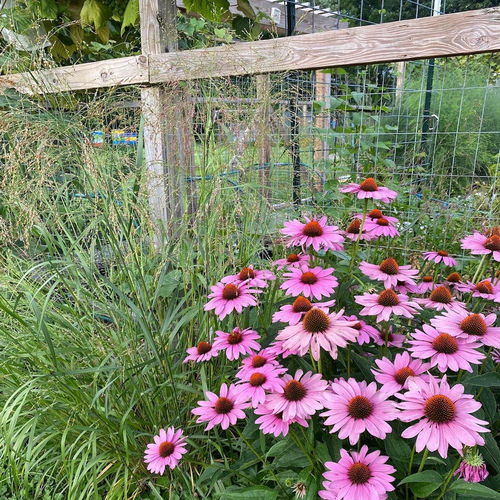 Open Garden Day!  (FREE)