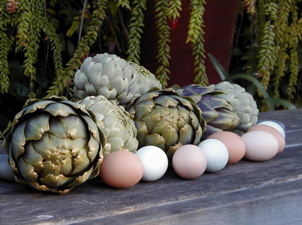 Home-grown artichokes and eggs