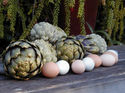 Home-grown artichokes and eggs