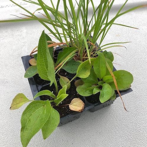 Prairie Plants 4-Pack FLATS