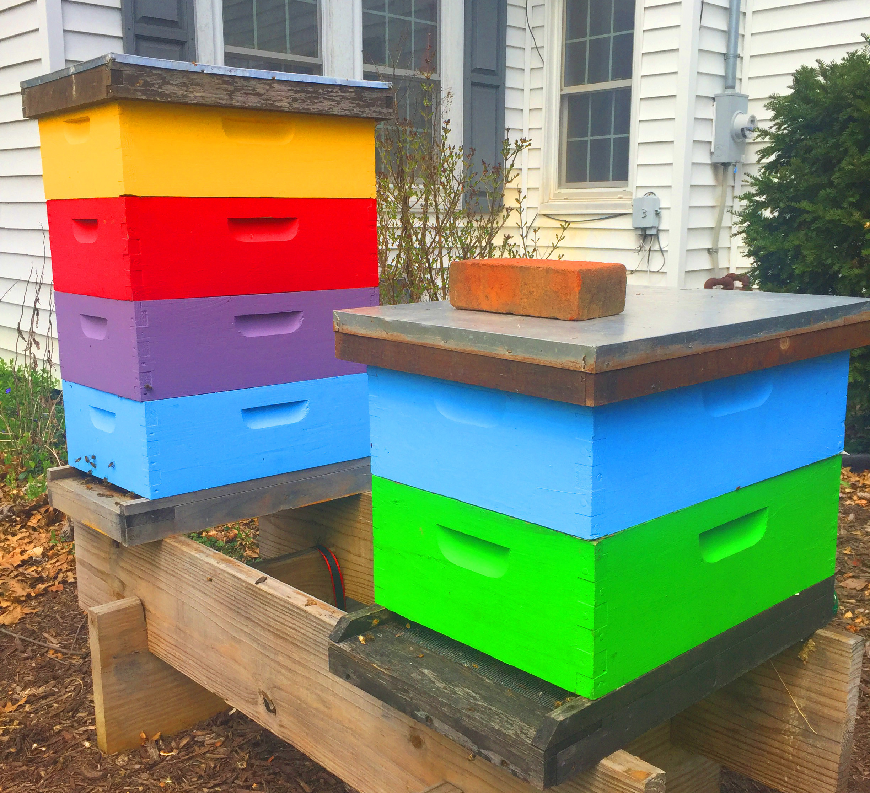 Beekeeping: Summer Splits