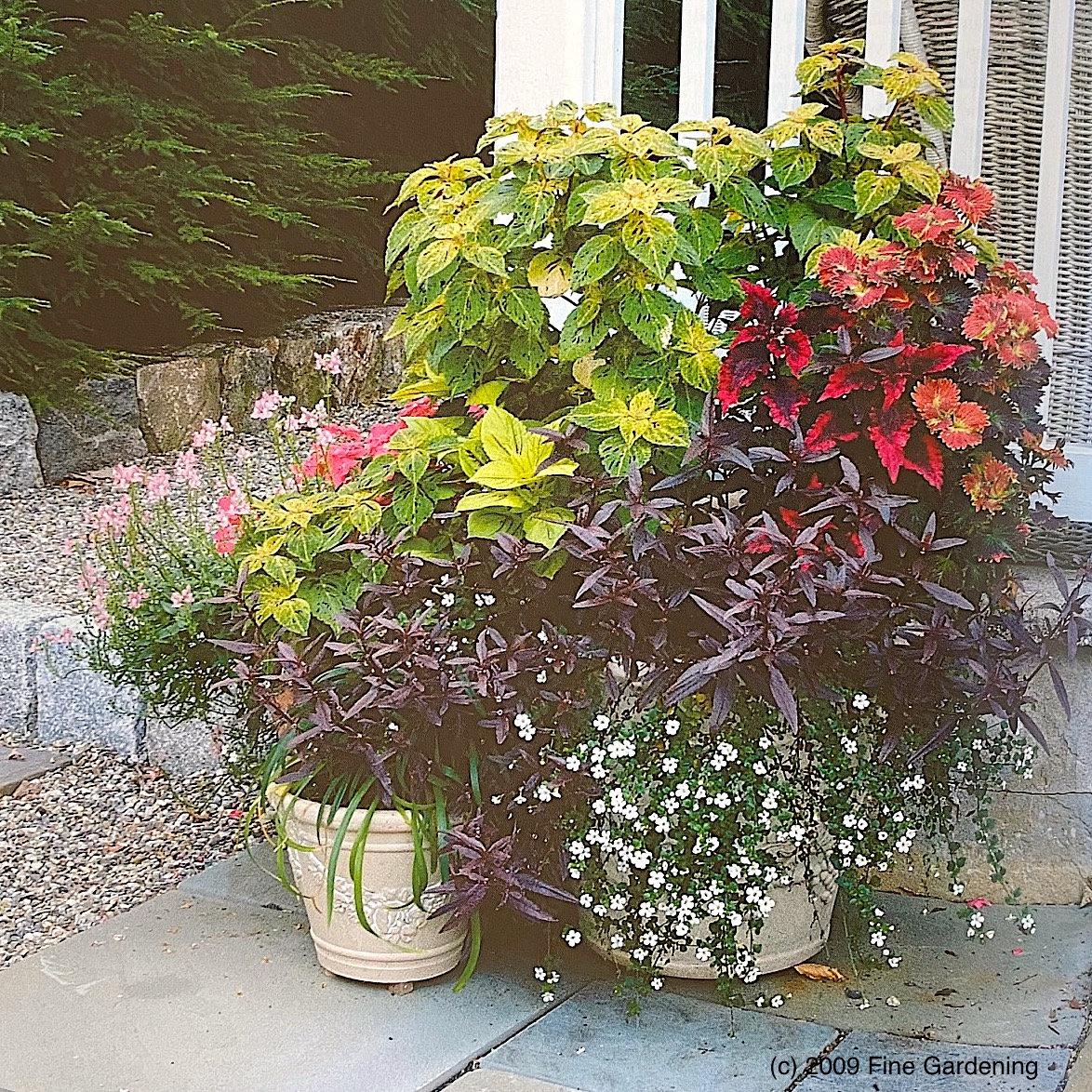 Container Gardening (online class)
