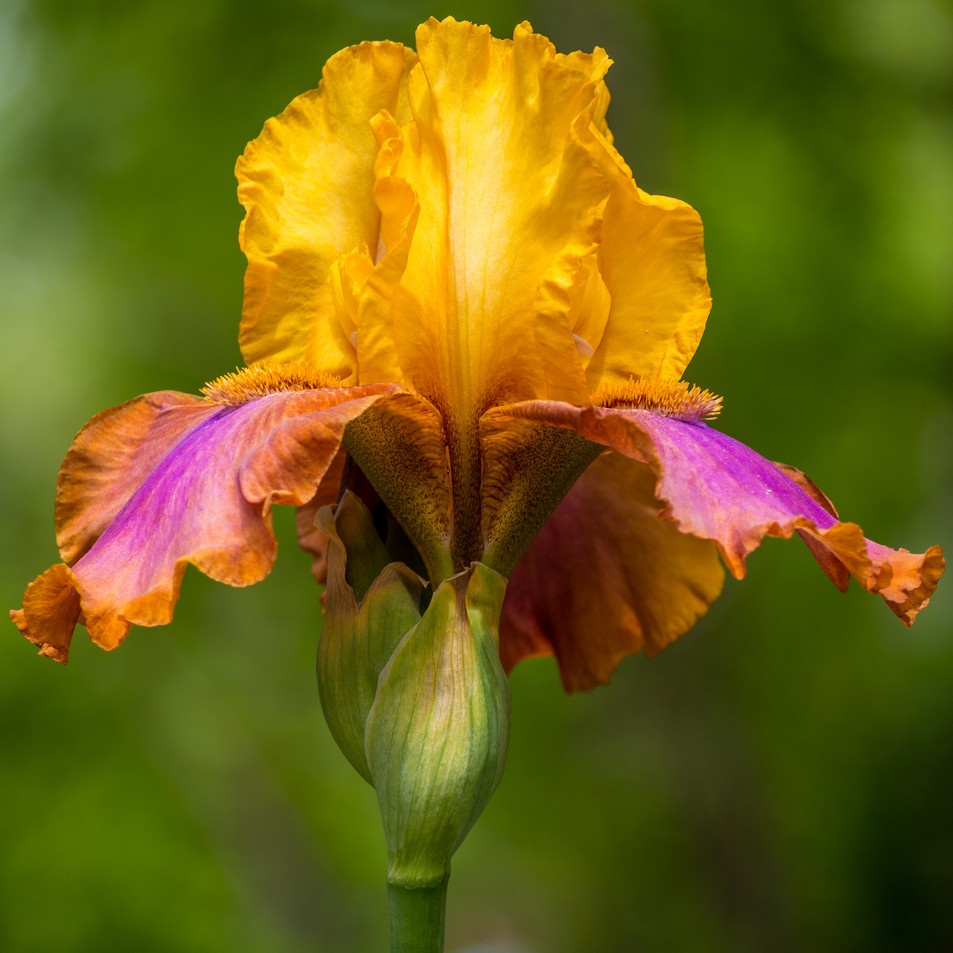 Iris One