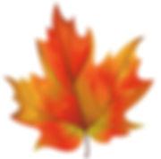 Fall leaf 4.jpg