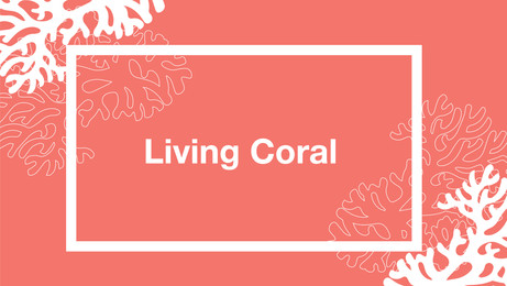Pantone Living Coral Is Playful & Just What The World Needs!