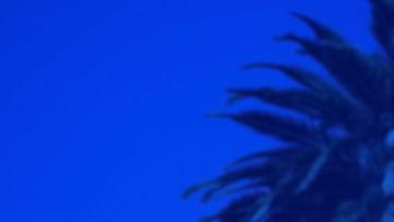 Palm2-Hero.jpg
