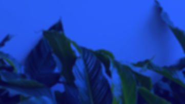 Leaf2-Hero.jpg