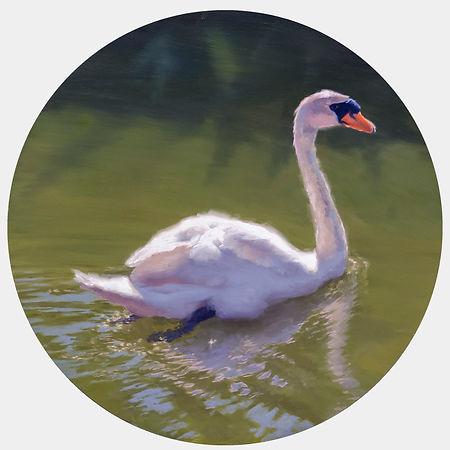 The Swan_22x22_White Background.jpg