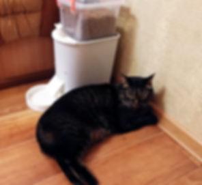 Кормушка для кота на весах
