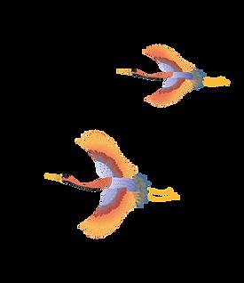 petits oiseaux.png