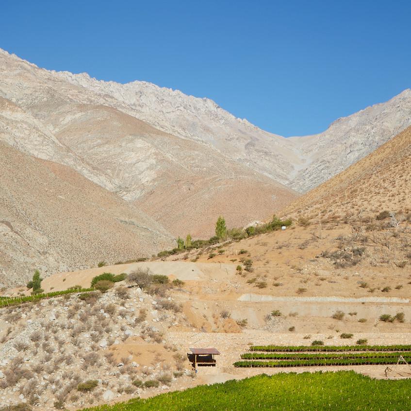 Wijngaard in de Andes