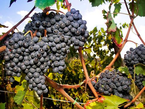 Mijn favoriete druif?