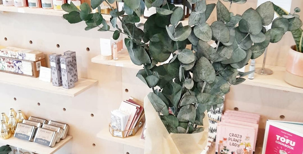 PRESERVED BABY EUCALYPTUS - COLLECTION ONLY