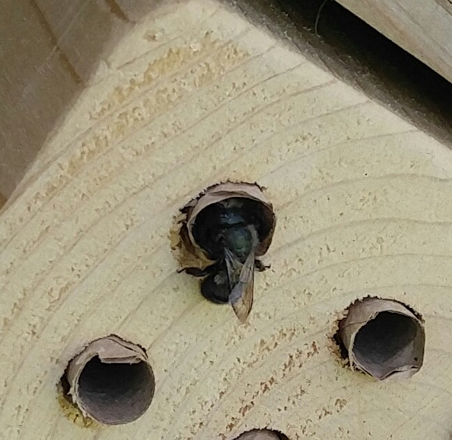 Bee in Bee House