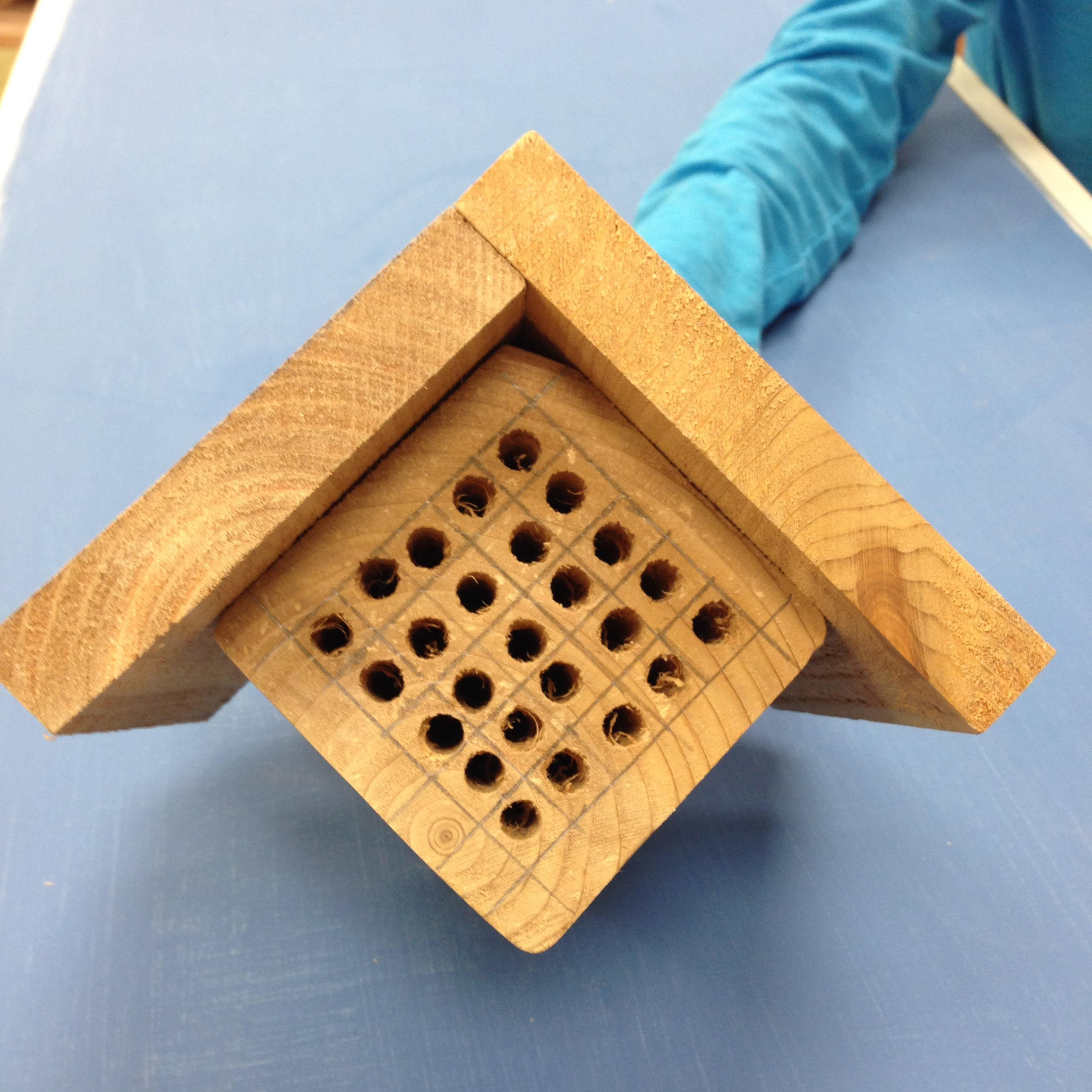 Student Bee House