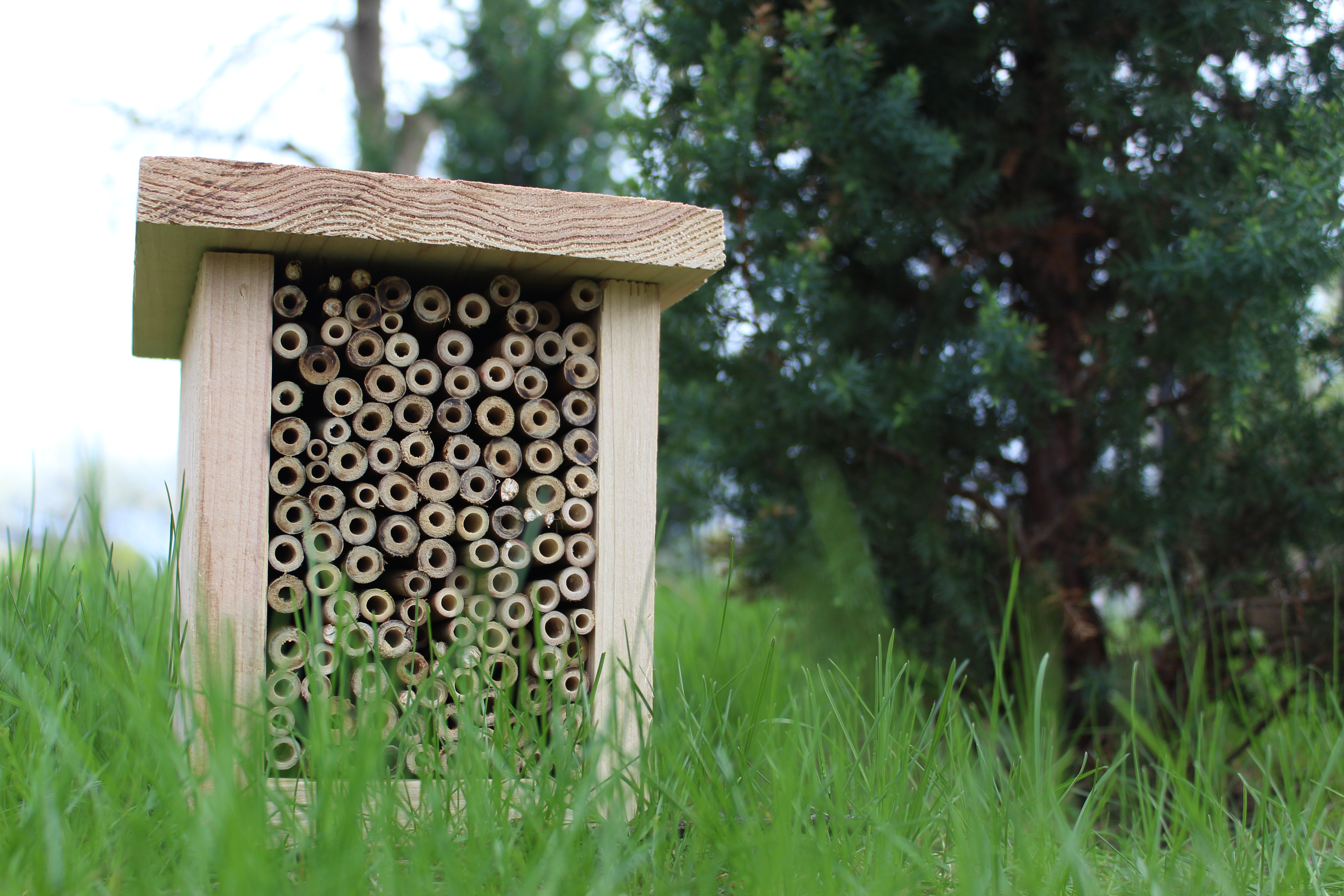 Advanced Solitary Bee House