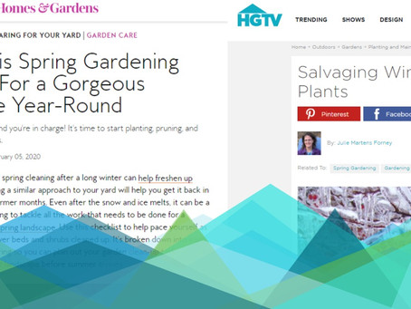 Content Consumption Trends: Landscaping & Gardening