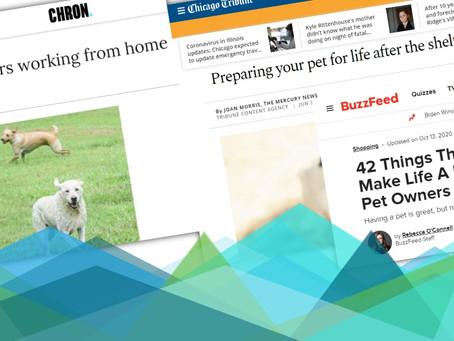 Content Consumption Trends: Pet Owners