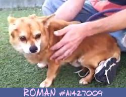 Roman - Pre3.jpg