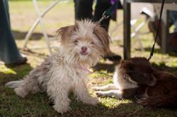 People  Pets 140118 20_.jpg