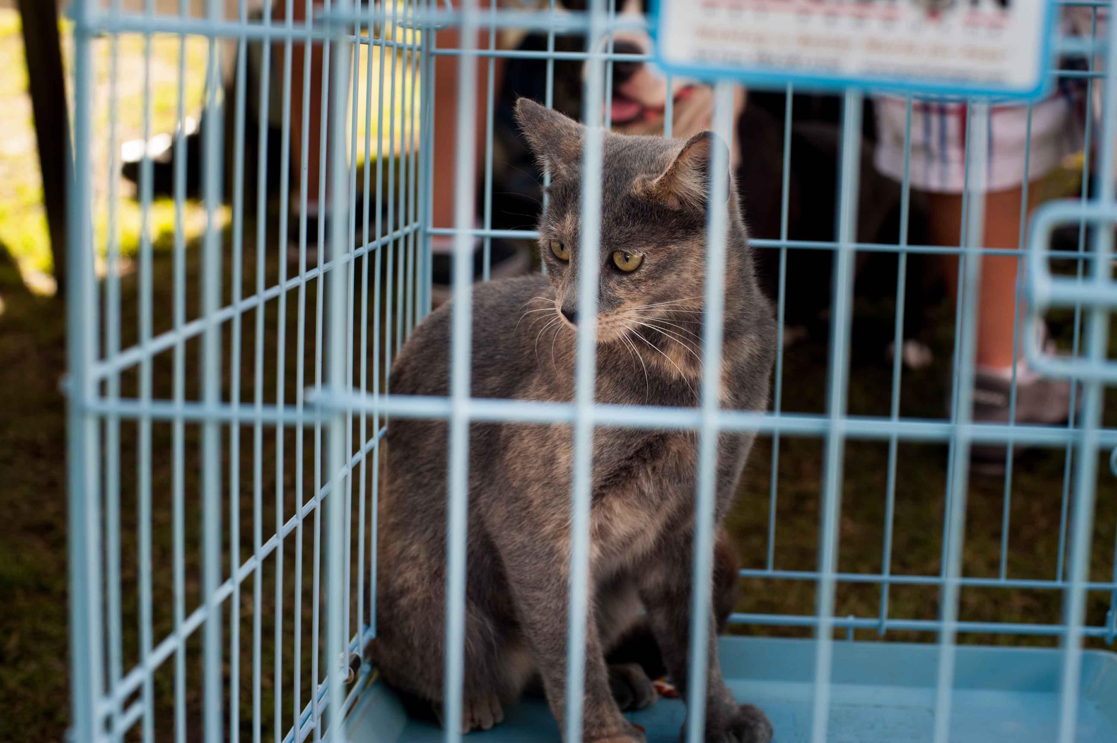 People  Pets 140118 62_.jpg
