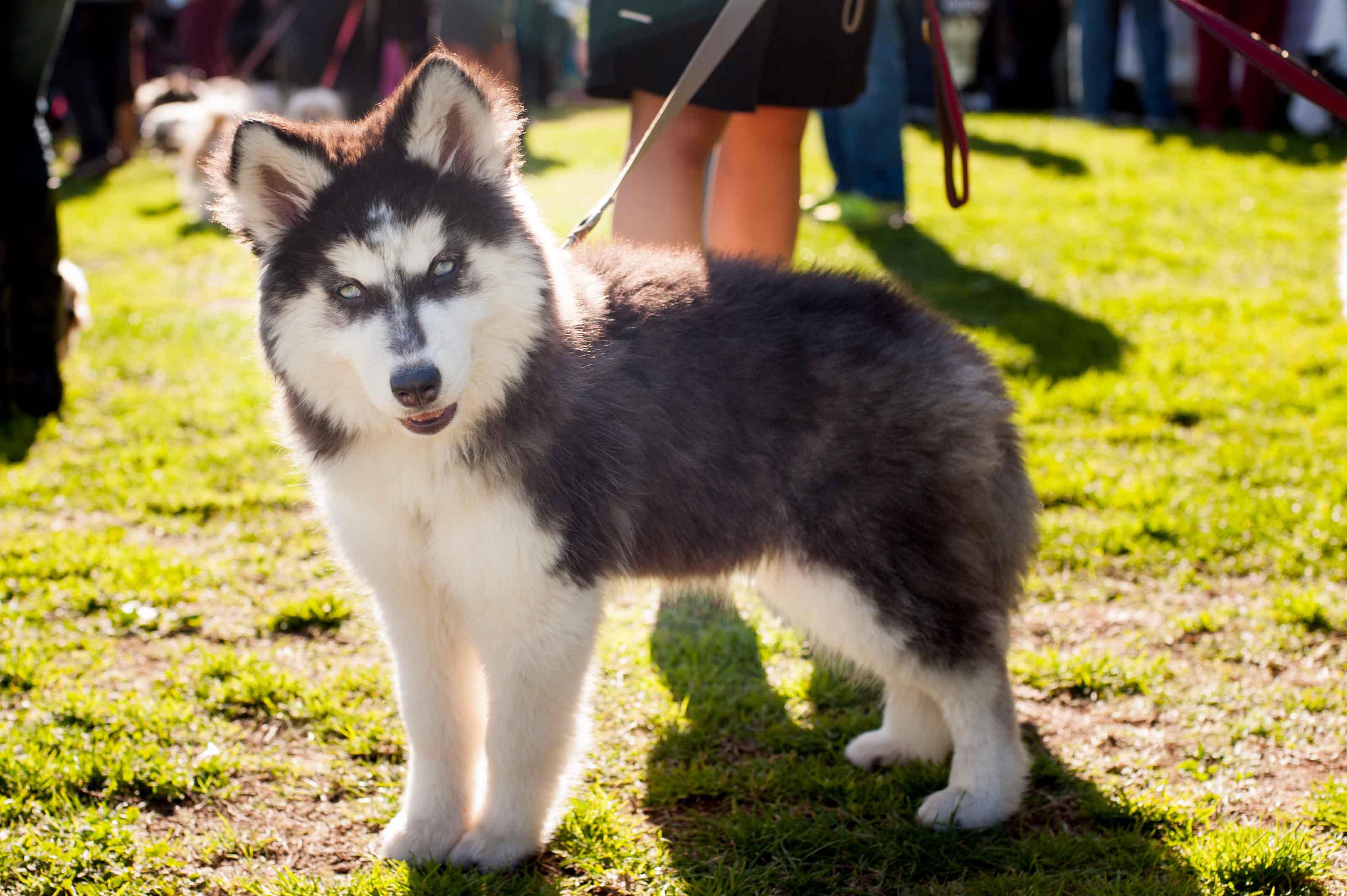 People  Pets 140118 61_.jpg