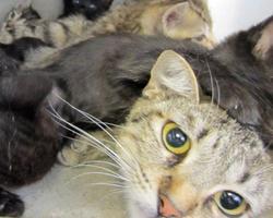 Giselle w kittens - Pre.jpg