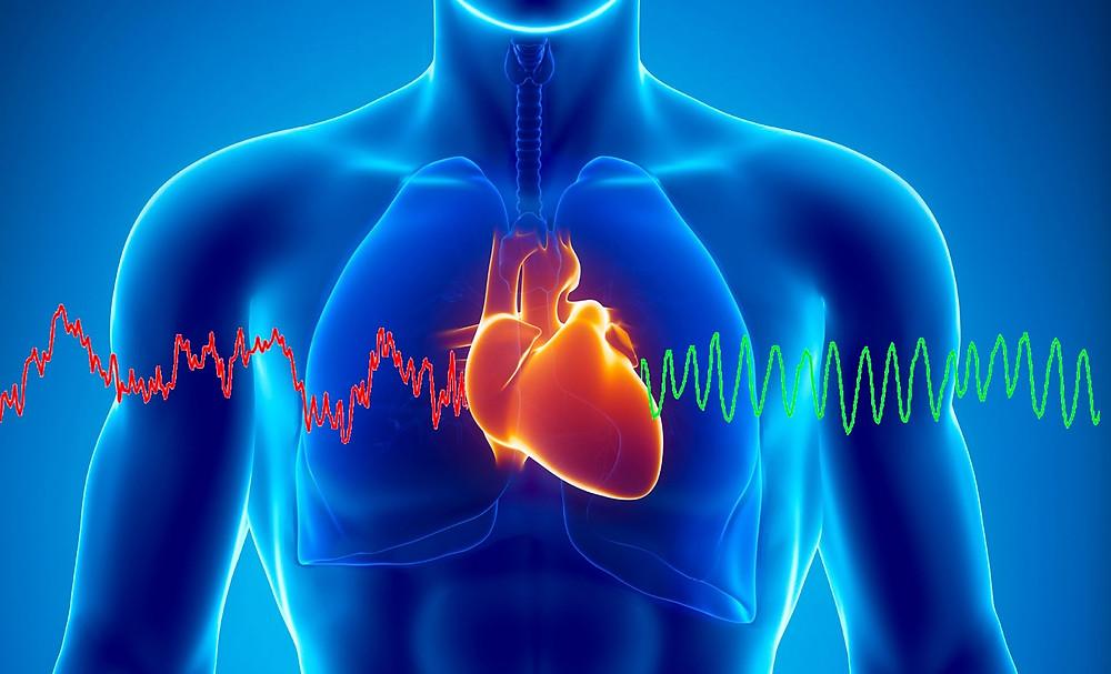 la cohérence cardiaque, on ralentit son coeur
