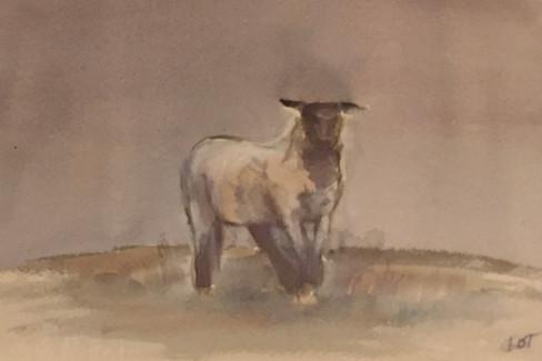 Llamb - Watercolor on Cold Press Paper