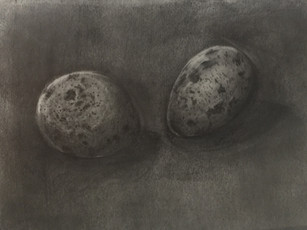 Eggs - Graphite on Tracing Paper