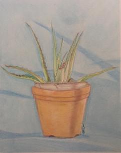Aloe Vera - Colored Pencil on Paper