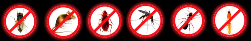 imagem-insetos.png