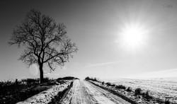 Lone tree along snowy track