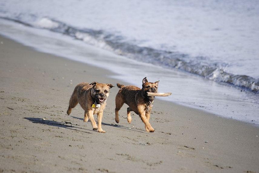 girls on at beach.jpg