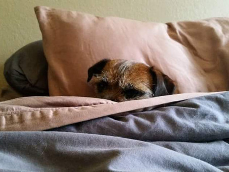 Kennel Cough- What you should know