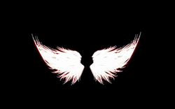 Wing_07