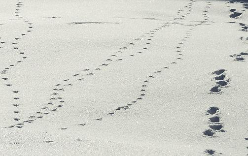 Auf den Spuren der Wildtiere im Naturpark Sölktäler