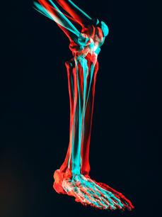 leg_bone.jpg