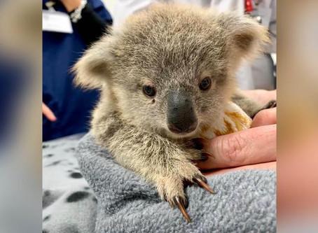 Australia Fire Animal Rescue Pouch Tutorial