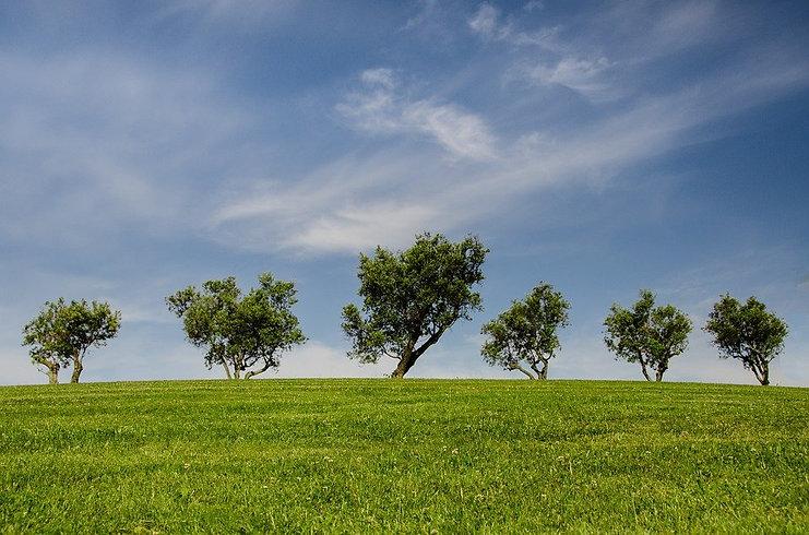 trees-790220_960_720.jpg